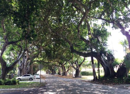 banyans over street