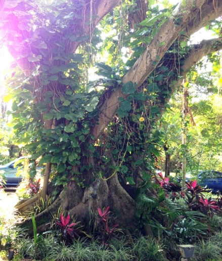 tropical plants and tree